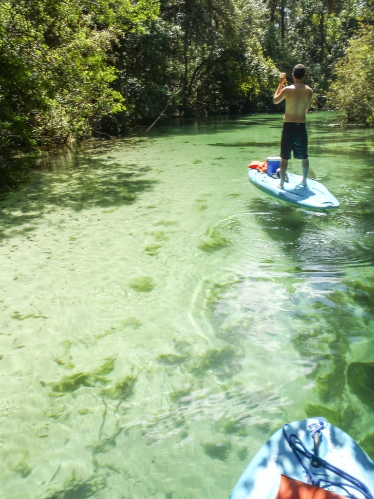 A man on a blue stand up paddle board paddling up the Weeki Wachee River on a sunny day.
