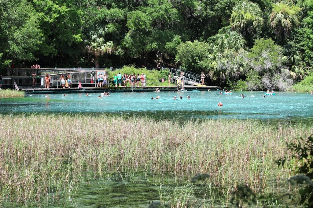 A view of the headspring and floating dock at Rainbow Springs State Park from the nature trail.