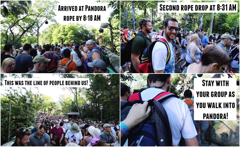 A collage of pictures showing how to rope drop the Animal Kingdom so you can ride Flight of Passage without waiting in line.