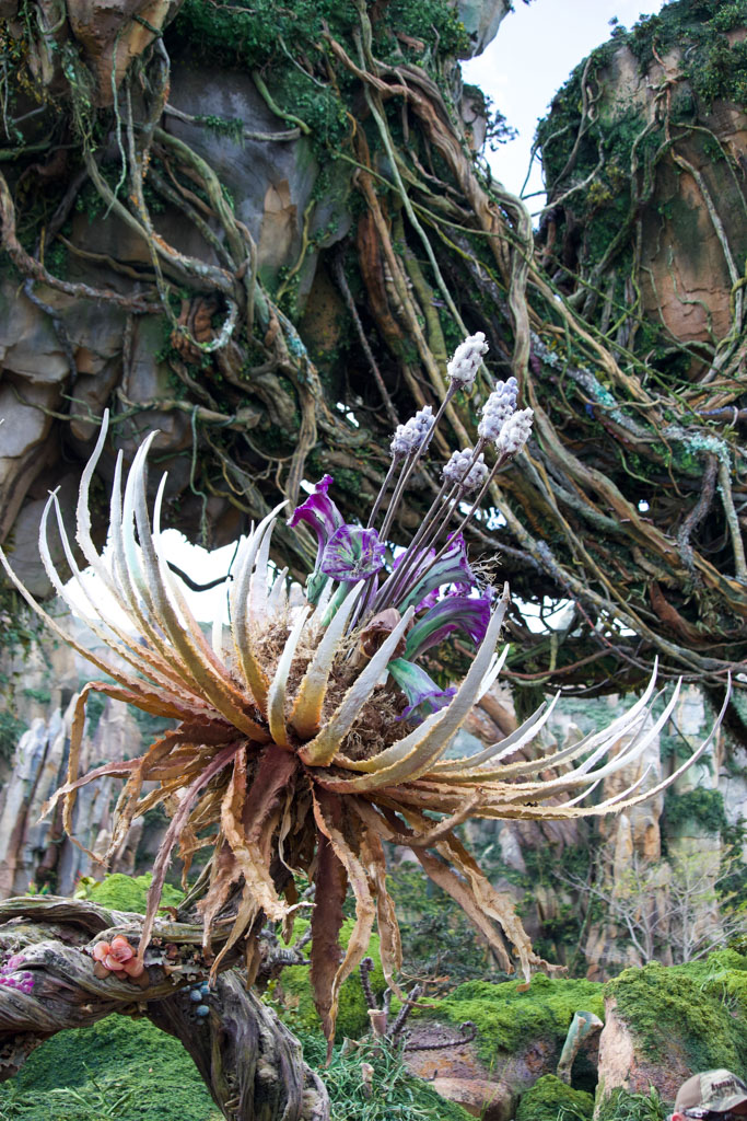 A picture of a flower in Pandora in the Animal Kingdom.