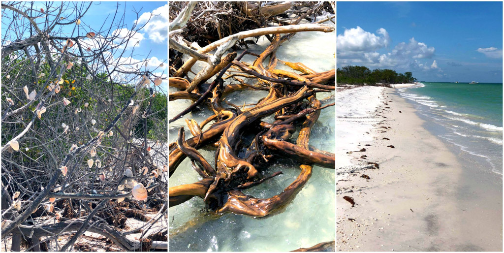 Shell trees, driftwood, and the beach at Caladesi Island State Park.